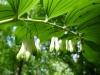 plantessoignent1